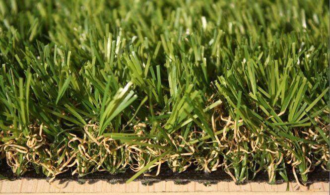 景观草sungrass