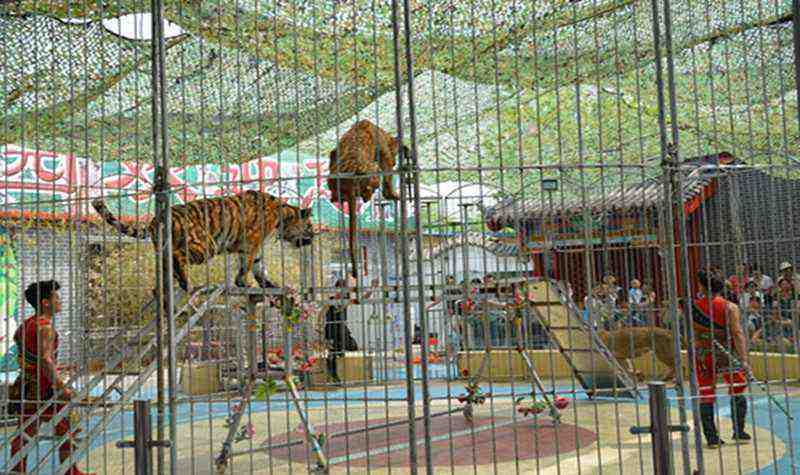 沧州市游乐园有动物园吗