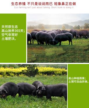 生態豬肉3