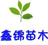 平和縣鑫錦苗木培育中心