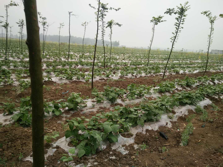 蒙城县永和家庭农场成立于2017年5月5日,地址位于亳州市蒙城县楚村镇