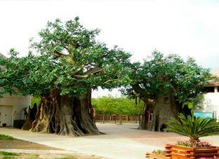 特价景观树形大门款式