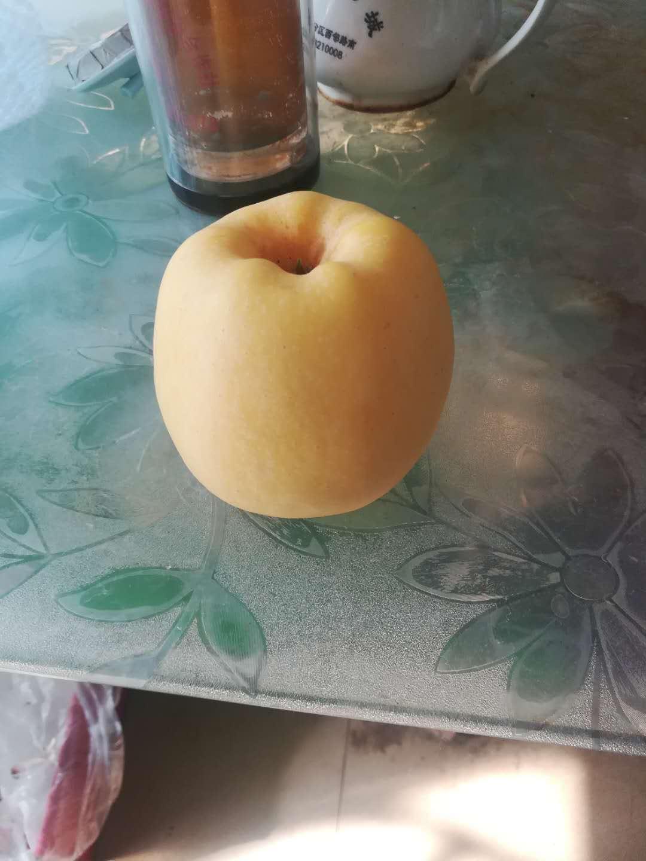 福建苹果树苗