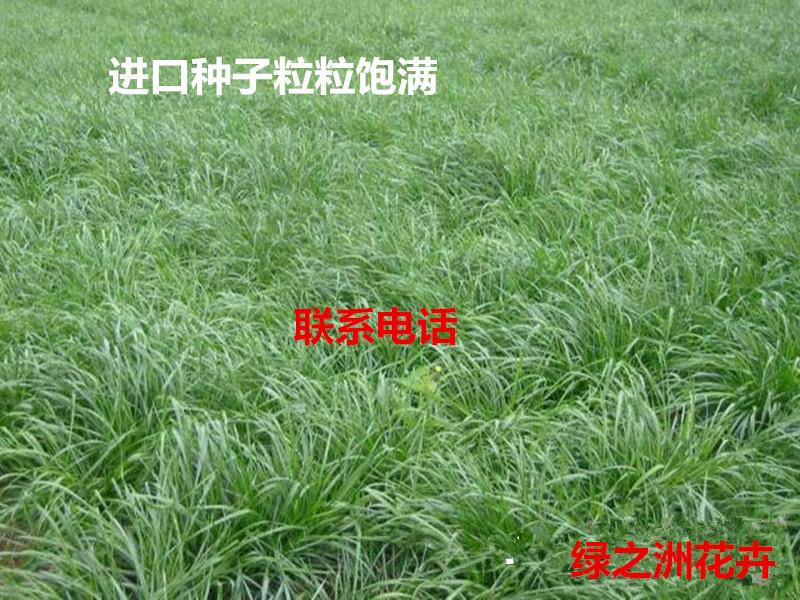 绿肥种子单色的多少钱一斤