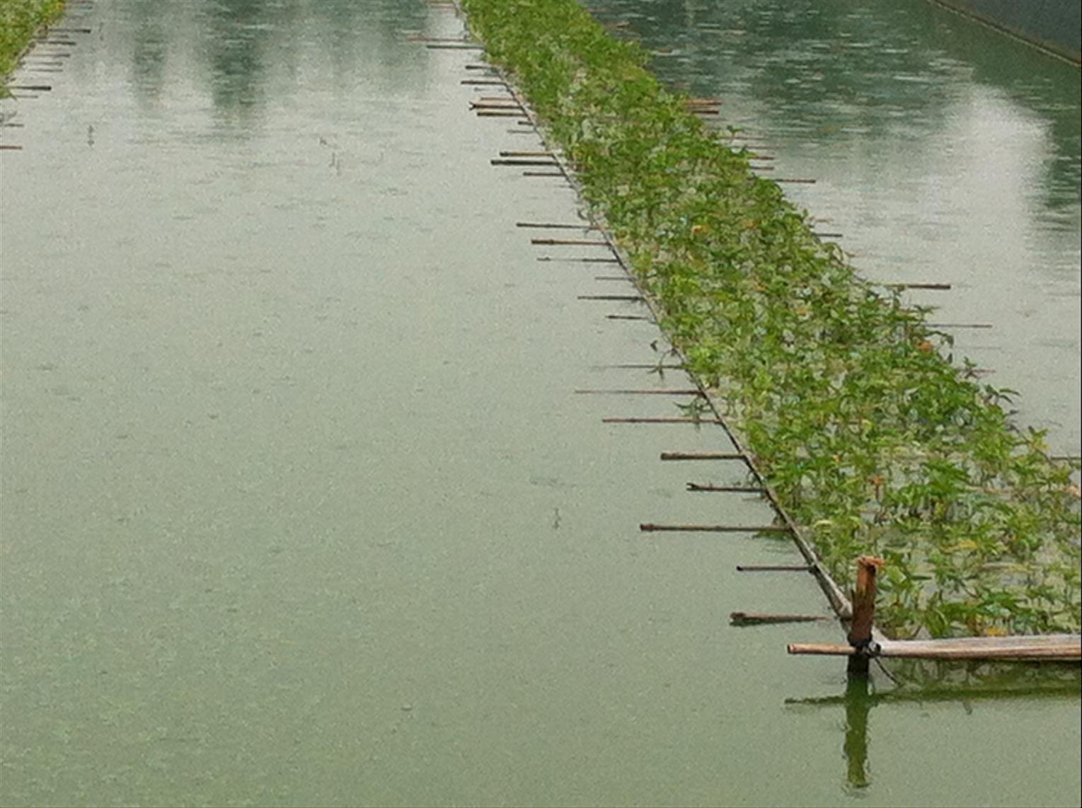 临汾泥鳅苗养殖基地