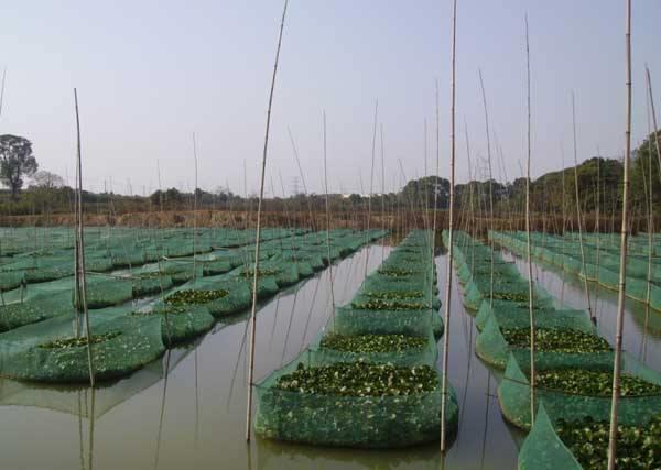 运城泥鳅苗养殖