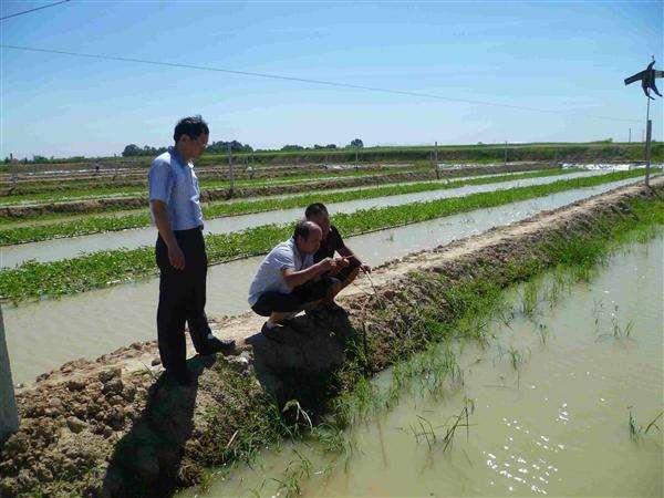 永州泥鳅回收