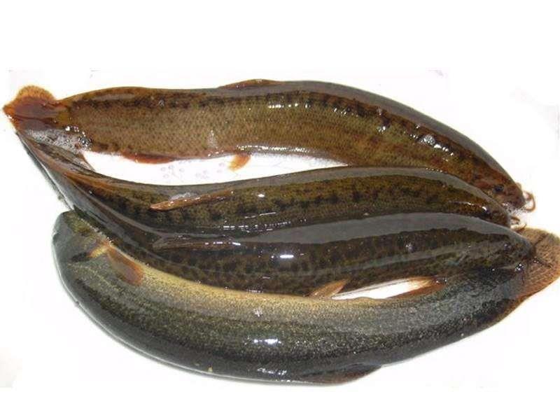 泥鳅养殖合作社