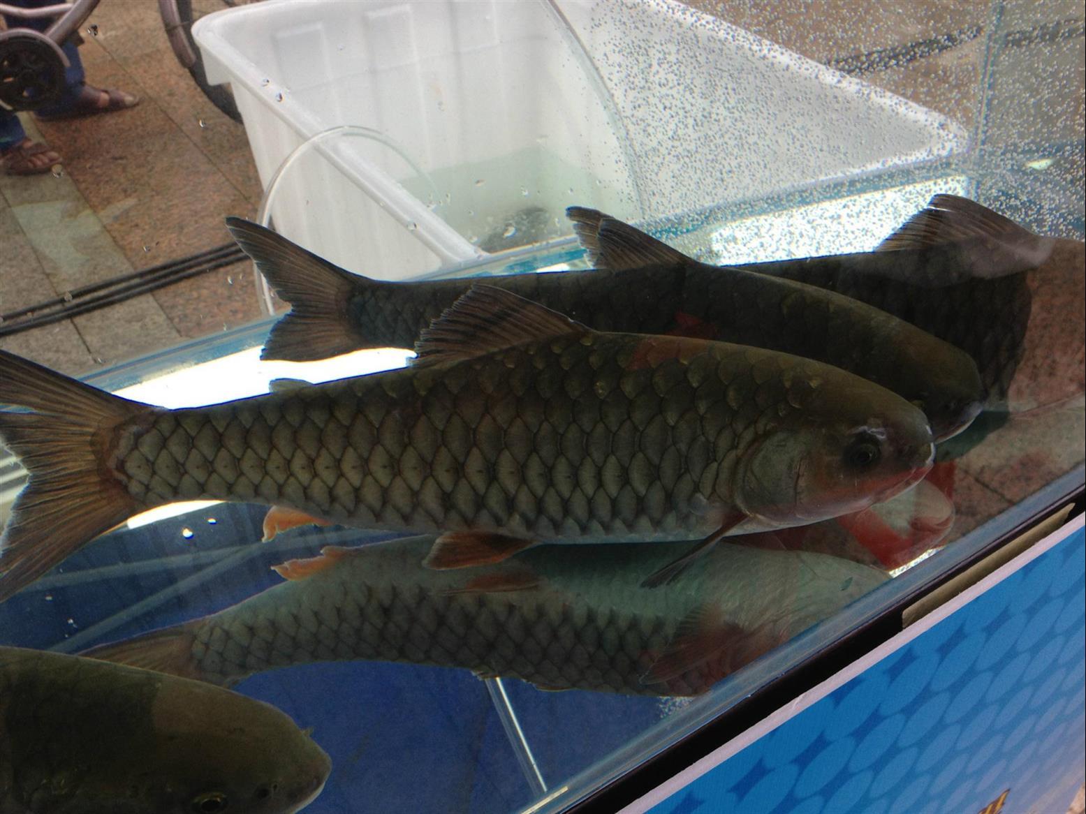 泥鳅养殖项目