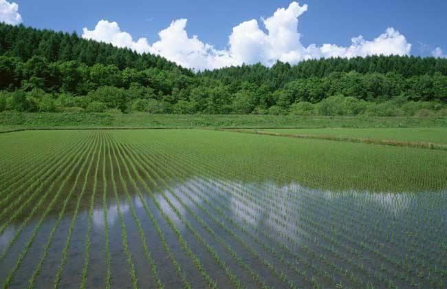 广东泥鳅养殖成本