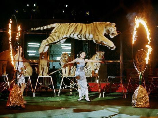 克拉玛依马戏团杂技表演优质服务