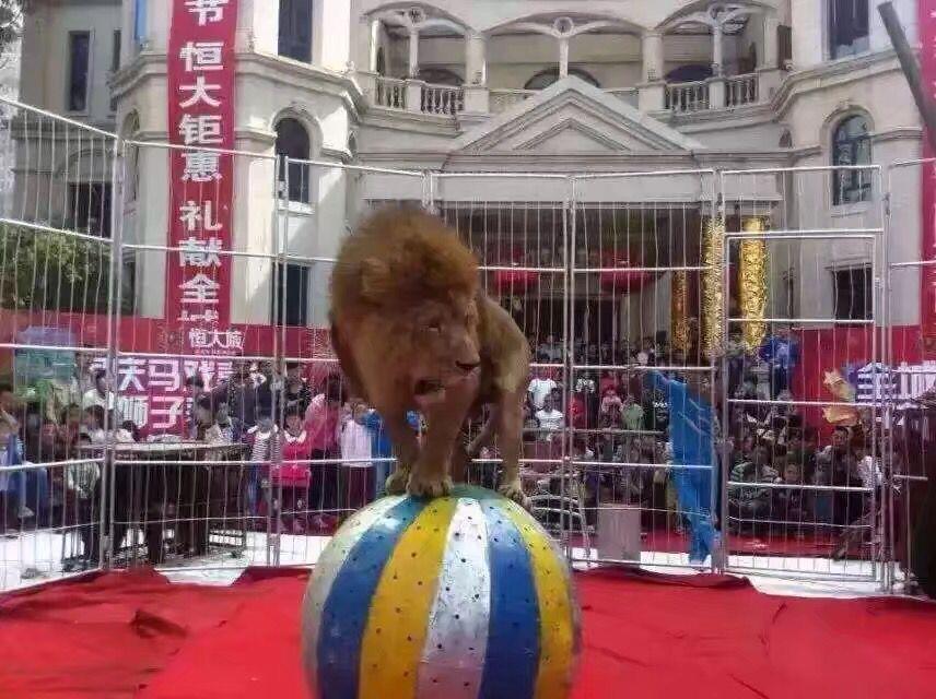 威海马戏团杂技表演表演优惠报价