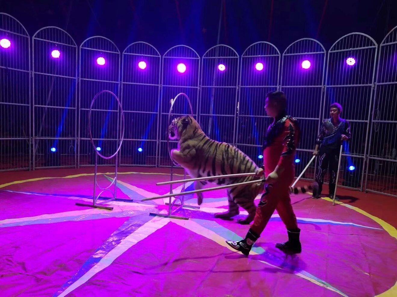 贺州马戏团杂技表演趣味项目