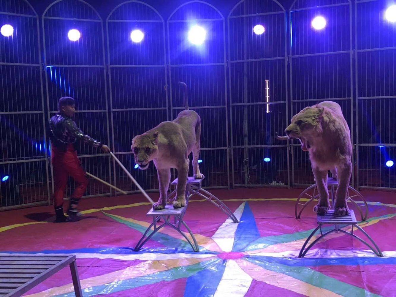 济南马戏团杂技表演一站式服务全包