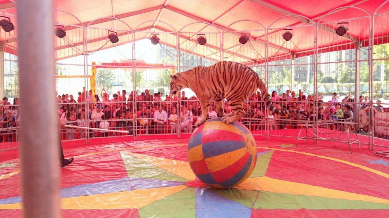 马戏团杂技表演一站式服务全包
