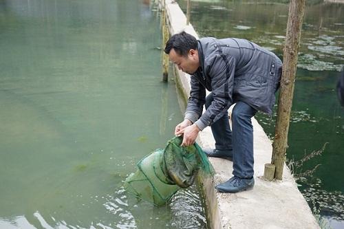铜陵泥鳅养殖技术