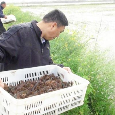 大理小龙虾养殖