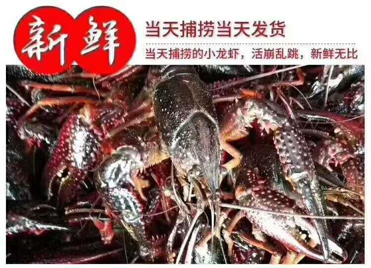 常州龙虾批发