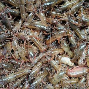 泰州小龙虾回购