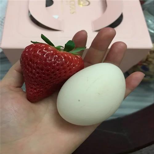 黔莓1号草莓苗介绍