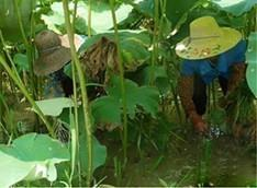 六安养殖青蛙基地