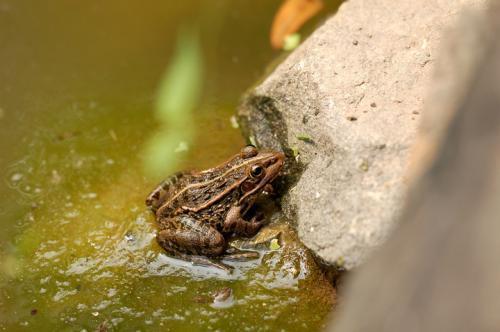 扬州青蛙养殖基地
