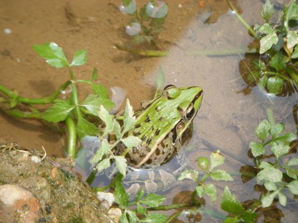 益阳养殖青蛙基地