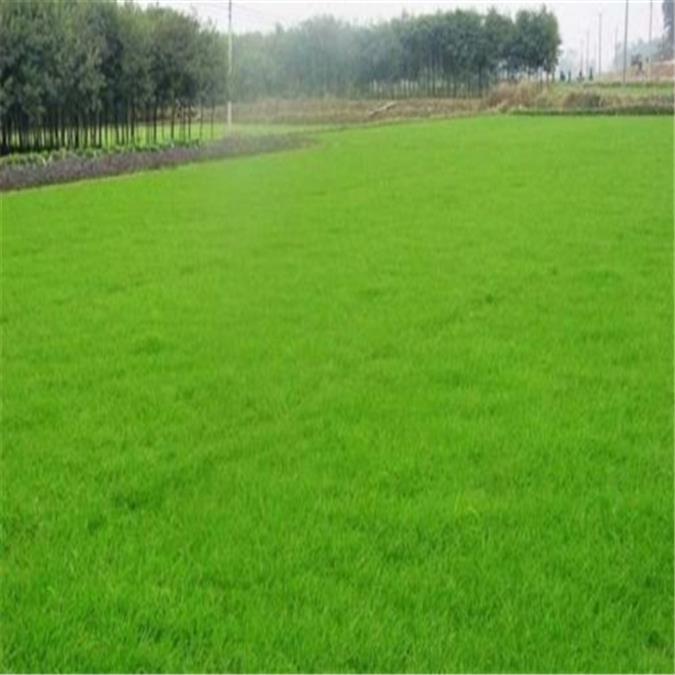 九江绿化植生毯
