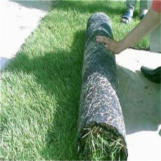 蚌埠绿化植生毯