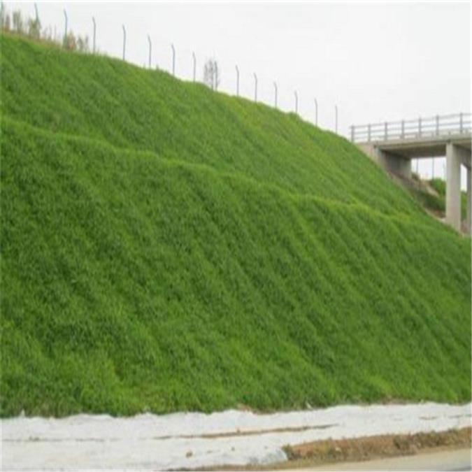 桂林国产植生毯