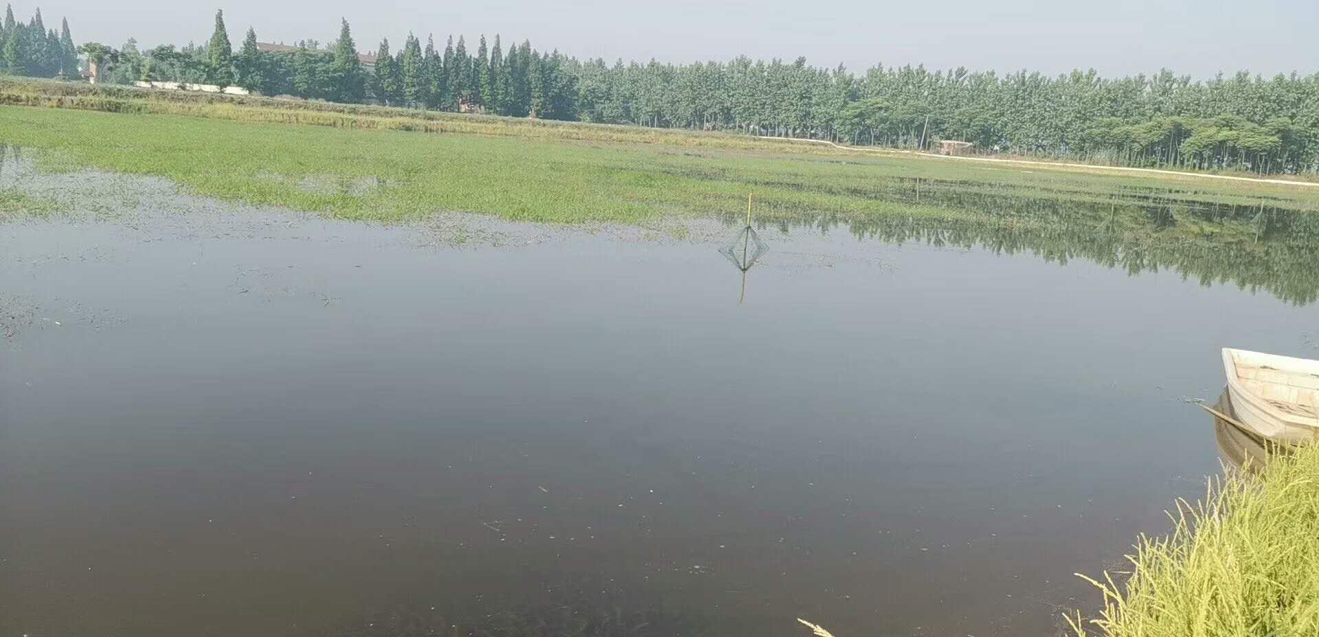 广元龙虾养殖培训基地