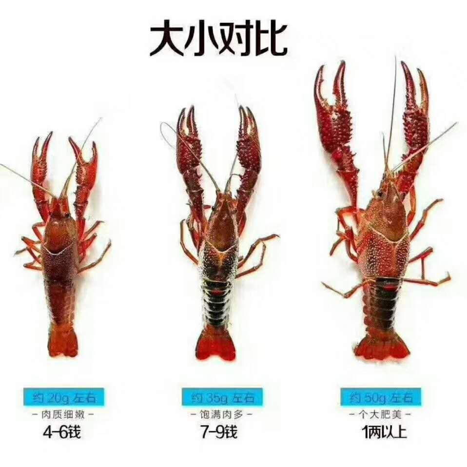 南平小龙虾养殖培训