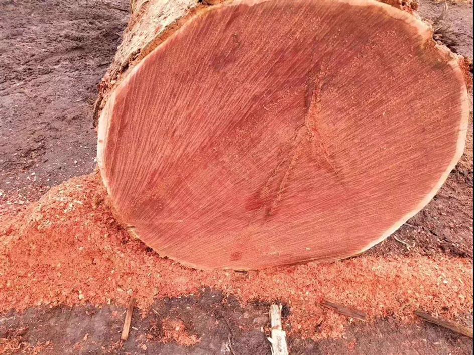 新乡柳桉木