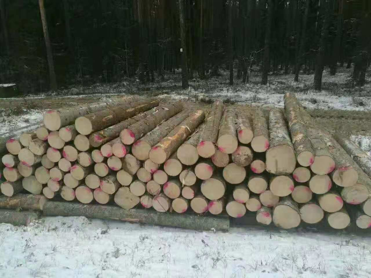 郑州芬兰木工厂