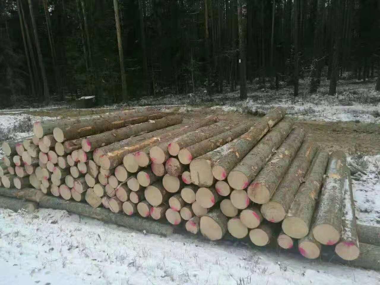 贵州芬兰木进口商