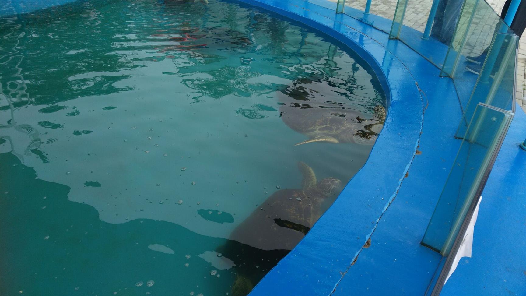 沧州家庭鱼池环保无溶剂防水漆生产