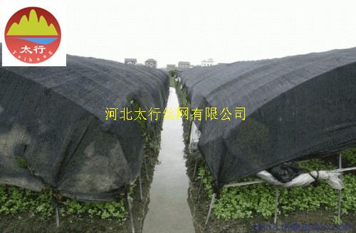 上海6针遮光网