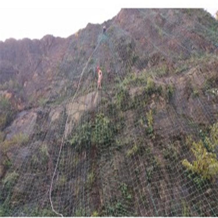 铜陵植物爬藤网
