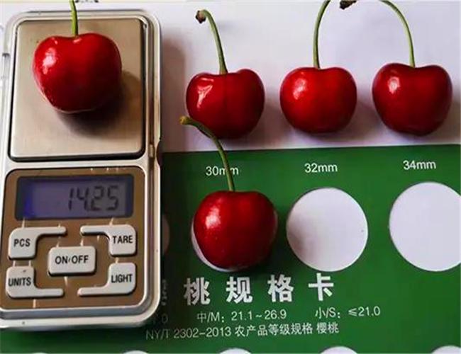 美早樱桃树苗基地,玛瑙红樱桃苗批发价格