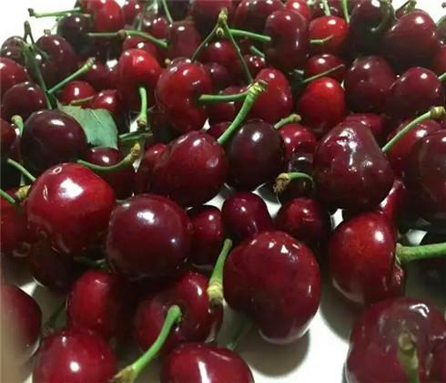 一公分大紫樱桃苗市场价格,三公分早大果樱桃树苗繁育基地