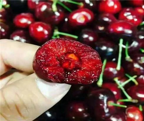 一公分布鲁克斯樱桃苗批发价格,三公分玛瑙红樱桃树苗几年结果