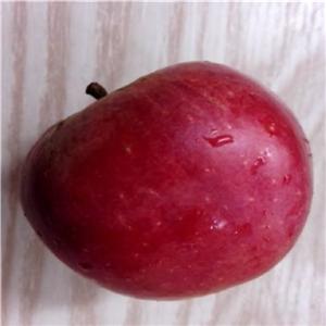 华硕苹果树苗 今年价格及报价一览表