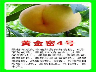 映霜红桃树苗 今年价格及报价一览表
