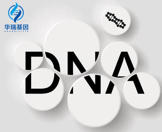 阳山靠谱DNA亲子鉴定公司