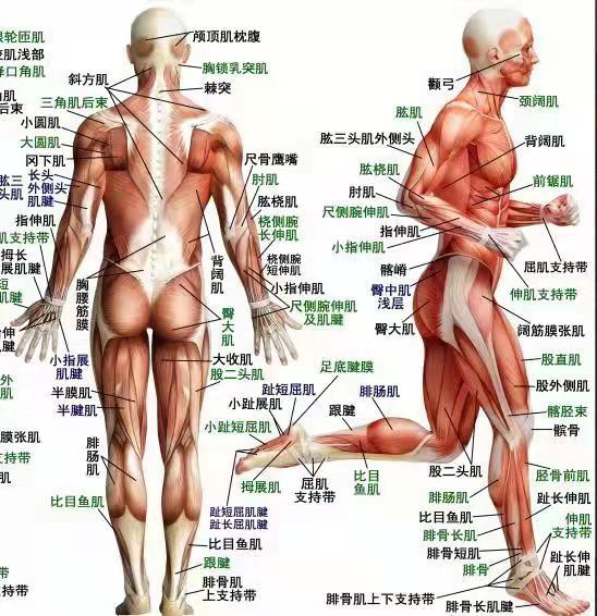湖南省娄底肌筋膜松解术