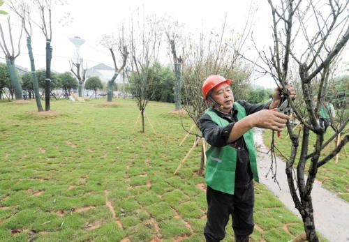 洪山区绿化施工方案