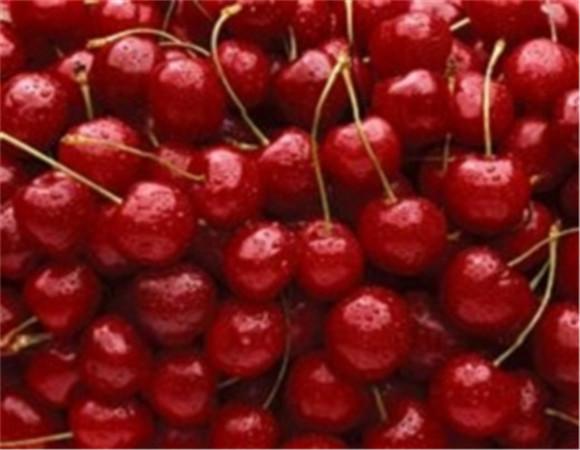 矮化樱桃树苗多少钱 矮化樱桃树苗全国快递物流发货