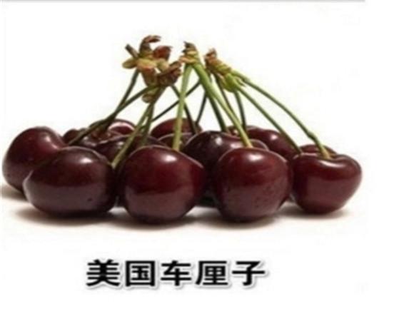 矮化樱桃苗新品种 矮化樱桃苗怎么培育