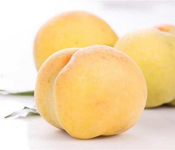 晚熟脆甜红桃树苗价格行情