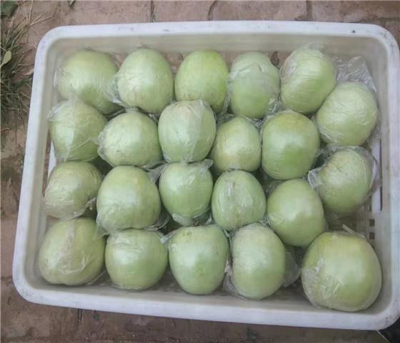 矮化苹果苗价格行情.矮化苹果苗坐果早产量高